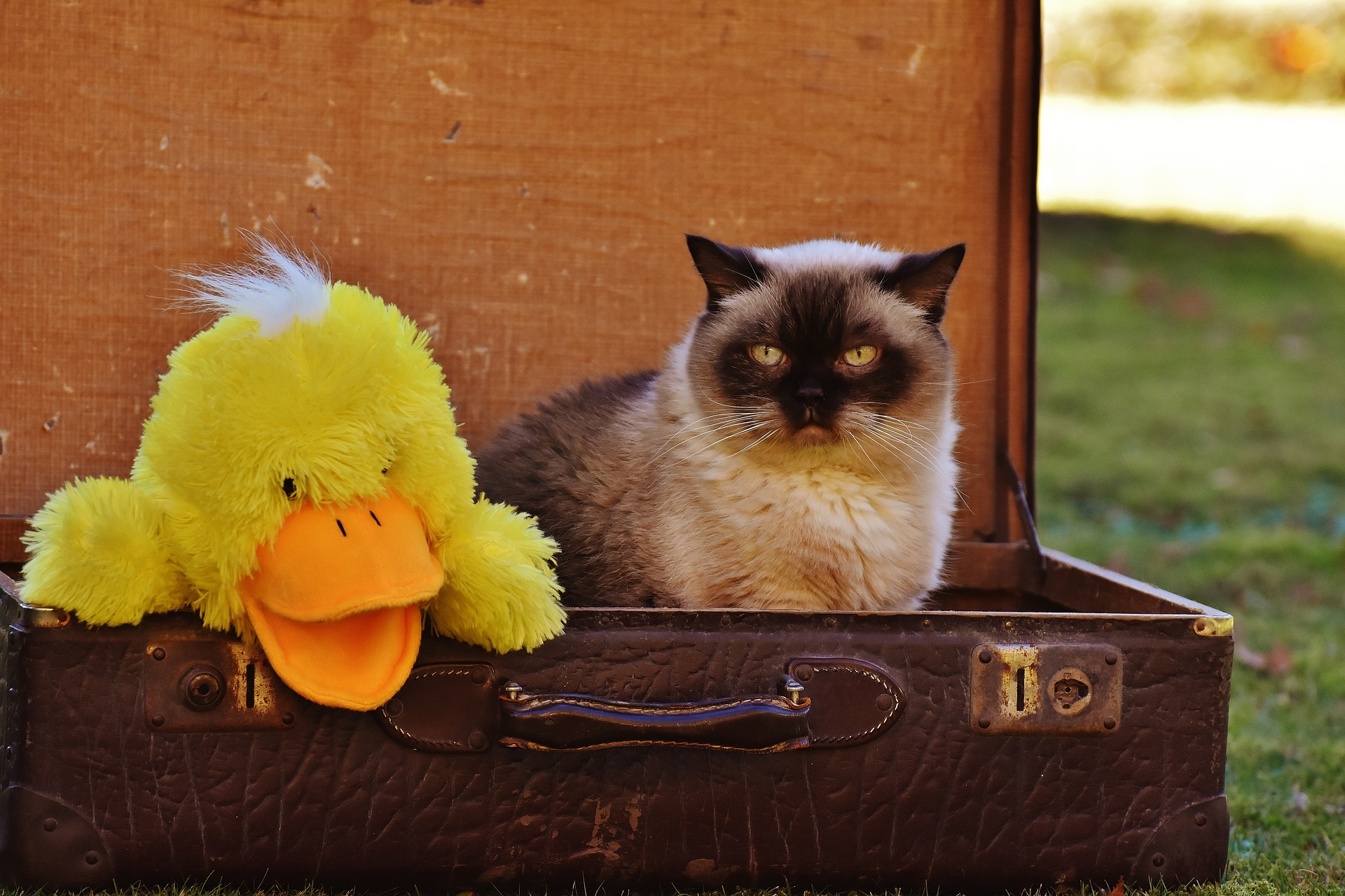 animaux-acceptes-au-camping-oyam